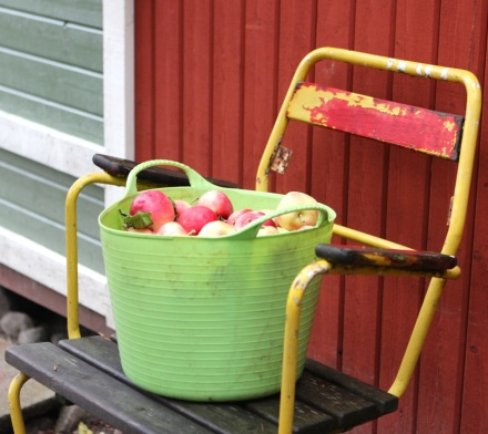 Nyplockade aromaäpplen