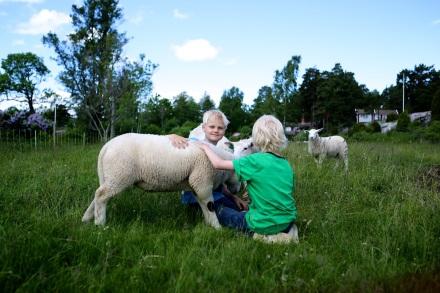 Det fanns två månader gamla lamm i hagen till Zack och Vigos förtjusning.
