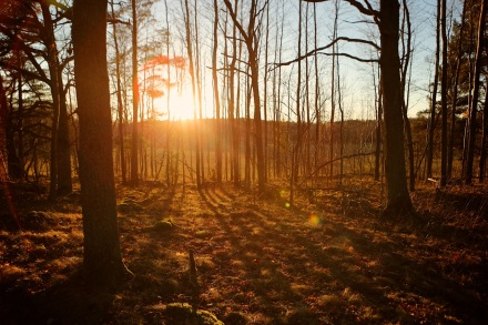 bogesundsskogen