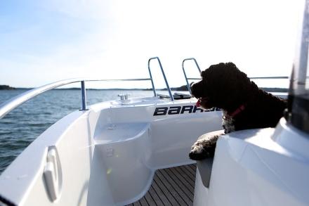zelda på båten