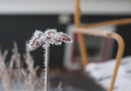 Vinterfjäril